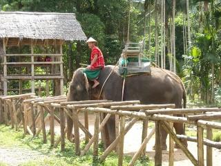 thailand-115682_640