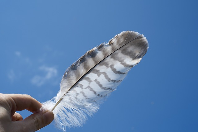 feather-690512_640