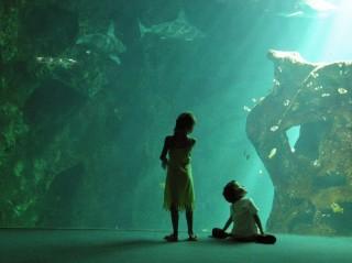 Enfants à l'aquarium de La Rochelle